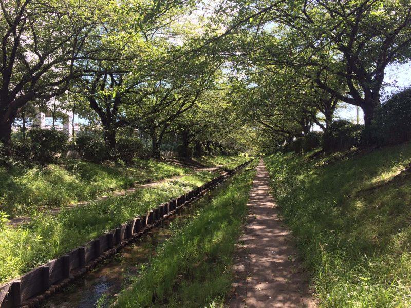 日本 横浜 夏の小川